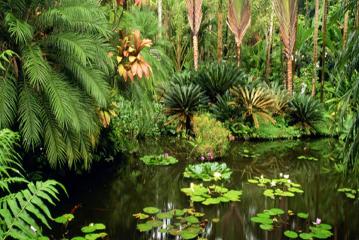 خمس أنواع النباتات معرضة للخطر بسبب الزراعة وقطع الأخشاب