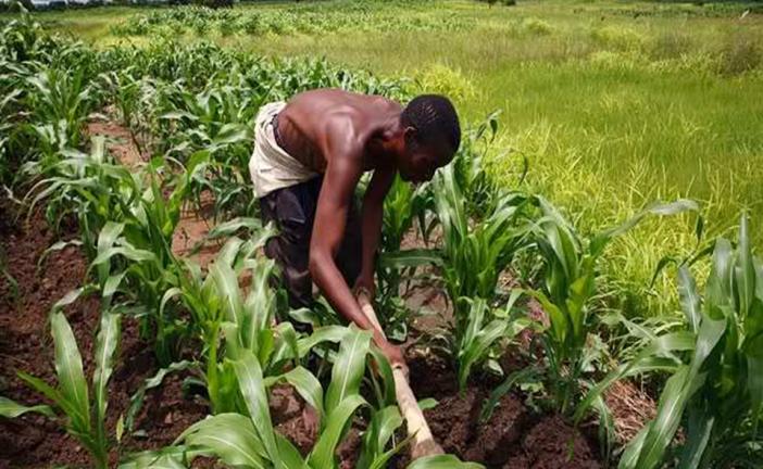 الزراعة المراعية للمناخ: مشروع التأهب في ملاوي وفيتنام وزامبيا