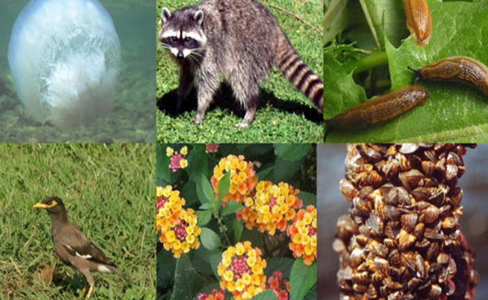 معلومات أساسية عن التنوع البيولوجي