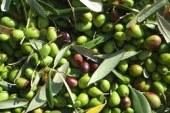 منتدى دولي بمكناس  حول شجرة الزيتون وزيت الزيتون