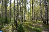 غابة المعمورة من أهم غابات البلوط الفليني على مستوى حوض البحر الأبيض المتوسط