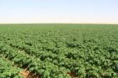 المَزارع الخالية من المبيدات قد تكون مربحة