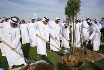 أسبوع التشجير: بلدية دبي توزع أكثر من 500 ألف شتلة زهور و50 ألف شجرة على عموم سكان إمارة دبي