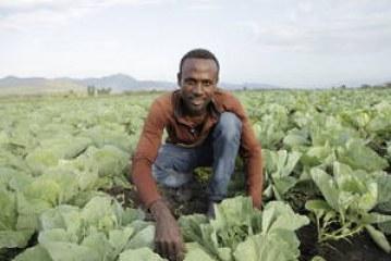 هل يمكن للزراعة أن توفر فرص عمل للشباب؟