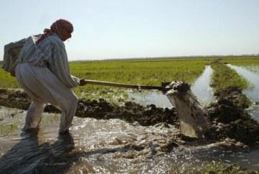 حظر زراعة الذرة والأرز في العراق بسبب شح مياه نهر دجلة