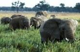حماية التنوع البيولوجي في أفريقيا