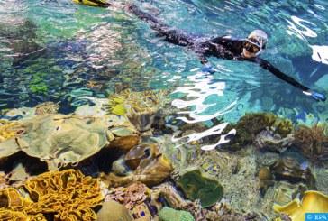 واشنطن.. موجات الحرارة البحرية تحدث بشكل متكرر وباتت تشكل تهديدا للتنوع البيولوجي البحري