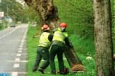 """مؤسسة الطاقة البولونية """"بي جي أوغورنيتسفو إي إينيرغيتيكا كونفينتسيونالنا"""" تقوم ب19 حملة بيئية لغرس الأشجار"""
