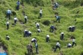 كولومبيا تعتزم غرس 180 مليون شجرة في أفق 2022