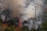 """""""جي 7"""" تخصص 20 مليون دولار للدول التي تكافح حرائق غابات الأمازون المطيرة."""