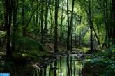 المعلومات حول غابات العالم ستصبح أكثر شفافية في السنوات المقبلة