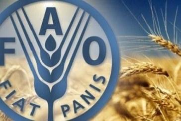 الفاو .. إطلاق سنة الأمم المتحدة الدولية للصحة النباتية 2020