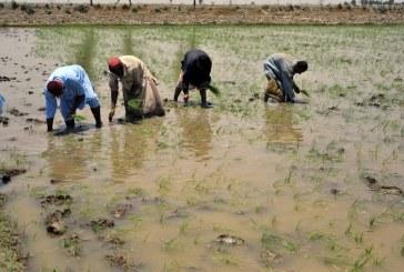السويد تتبرع بمبلغ 12 مليون دولار أمريكي للصندوق الدولي للتنمية الزراعية لمساعدة المزارعين في المناطق الريفية على التكيف مع تغير المناخ