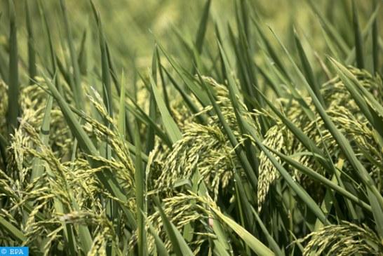 وزراء البيئة في أمريكا الوسطى يلتزمون بتطوير سياسة فعالة للنهوض بالزراعة المستدامة