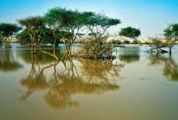 قطر .. الدعوة إلى ترشيد استخدام البلاستيك للحفاظ على أشجار المانغروف