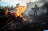 الأضرار الناتجة عن حرائق الغابات الكارثية الأسترالية يمكن أن تؤدي إلى قفزة هائلة في عدد أنواع الحيوانات المحلية المعرضة للخطر