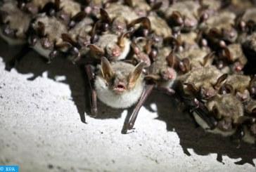 تقرير أممي يحدد سبل كسر سلسلة انتقال الأمراض من الحيوانات إلى البشر