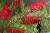 إهمال الصحة النباتية يمكن أن يكون له نتائج مدمرة (الفاو)