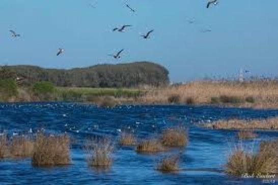بلاغ الائتلاف المغربي من أجل المناخ والتنمية المستدامة:من أجل حماية   الملك المائي لضاية بوعزة والمناطق الرطبة الاستراتيجية