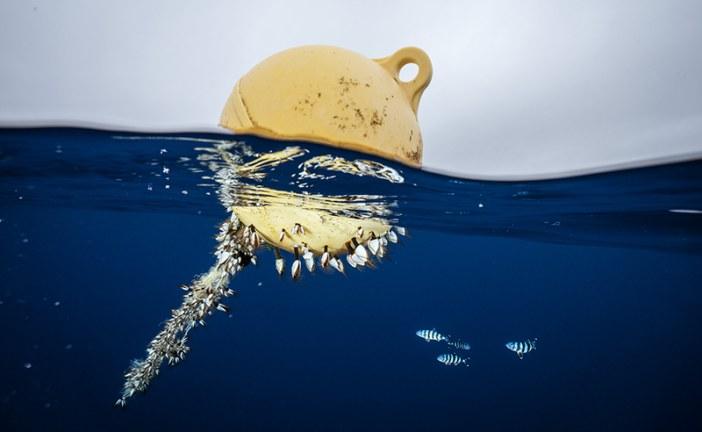 مصايد الأسماك: سبيل عيش يواجه تهديداتٍ عدّة!