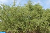 إقليم تزنيت.. غرس 100 هكتار من أشجار الأركان
