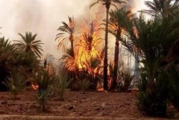 حريق مهول يلتهم واحات زاكورة وطائرات مغربية تتدخل لإخماد الحريق