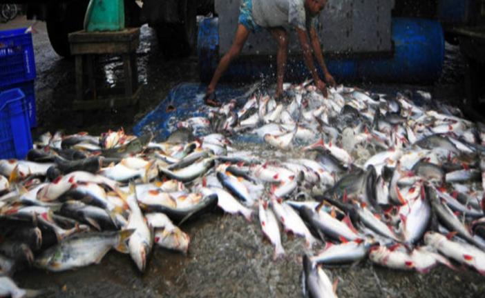 أول اتفاق عالمي لمكافحة صيد الأسماك غير القانوني يدخل حيز التنفيذ