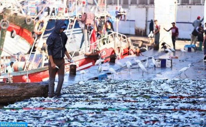 آسفي .. حملة تحسيسية حول السلامة البحرية على متن مراكب الصيد